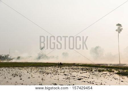Burning Rice Straw