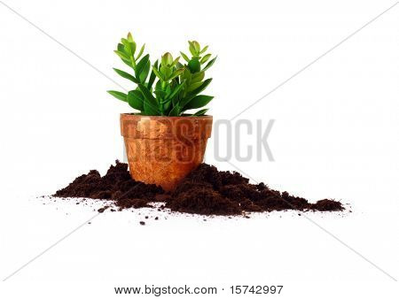 Clay pot with herbs on white background