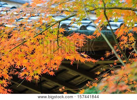 Kotoin Temple in autumn (Norther Kyoto, Japan)