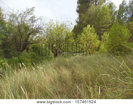 paisaje salvaje con árboles pinos y hierba