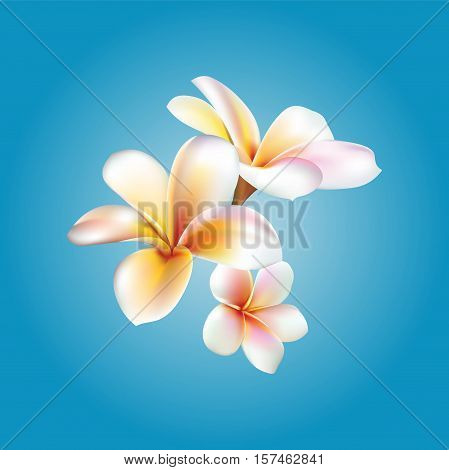 Plumeria. Vector flower illustration eps