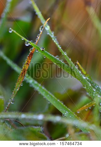 Cool atmosphere.Water droplets on a green and orange leaves