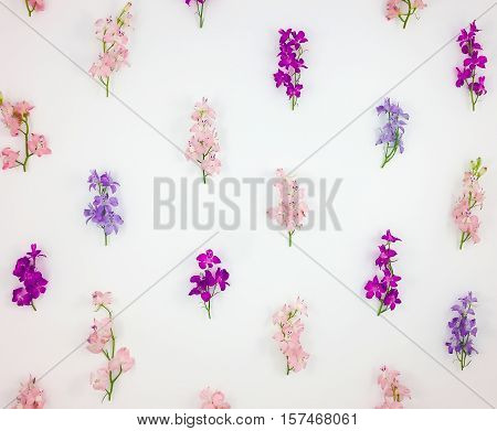 Summer or spring pattern with colorful toadflax flowers on white background. Meadow gentle pink blue and violet flowers. Flat lay top view view from above poster