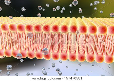 Cell membrane, lipid bilayer, 3d illustration of a diffusion of liquid molecules through cell membrane