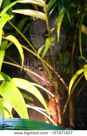 Spider web with colorful background. Summer day. Green background with grass.
