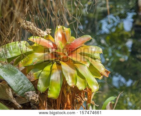 sunny jungle scenery including a bromeliad plant
