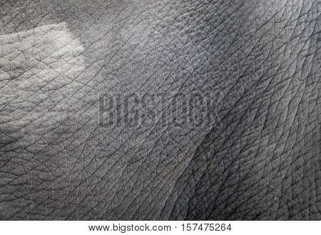 gray Elephant skin texture closed up for background