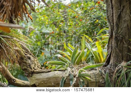 Various Jungle Plants