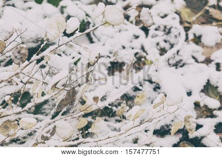 Winter Background With Dry Herbs And Lunaria Annua