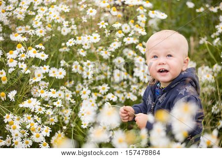 Cute baby boy with flowers sitting in chamomile field. Toddler boy in wild flowers meadow. Smiling child sitting on the daisy field.