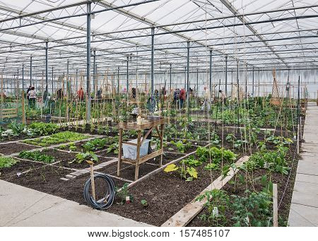 Allotments in a greenhouse in the Netherlands