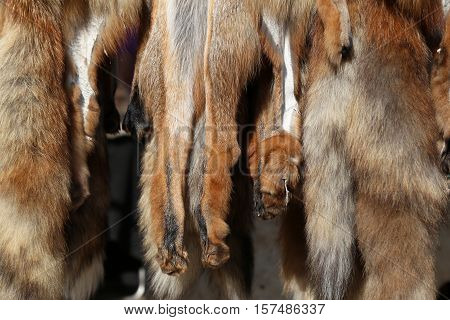 Fox tanned furs and skins with paws hanging