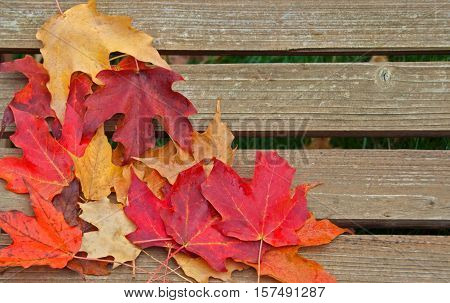 A photo of a few multicolored leaves lying on a wooden bench