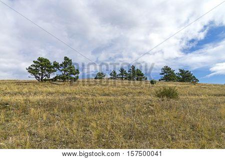 Relict pines on top of the mountain. Tokluk-Syrt Ridge Crimea. September.