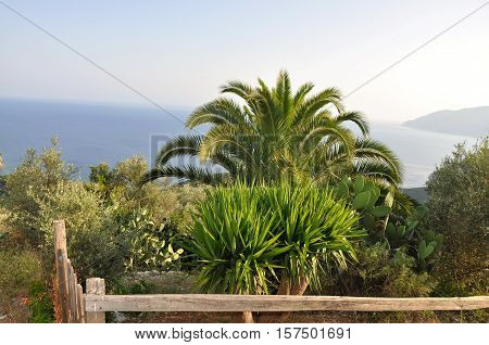 Palm tree and other flora in Greece mediterranean flora.