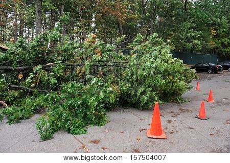 car damaged by fallen tree during storm in the parking area