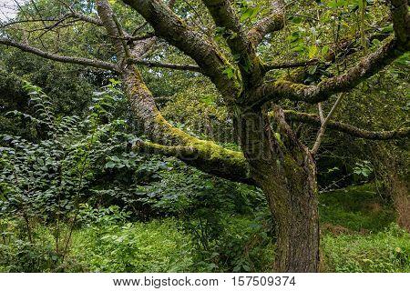 asia natural green deep jungle big tree