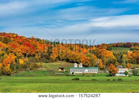 Fall Foliage at a farm in Vermont
