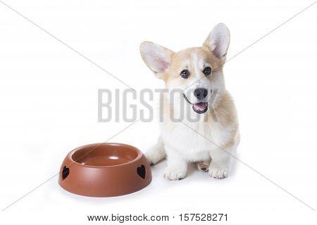 corgi dog is sitting near a big empty dog food bowl