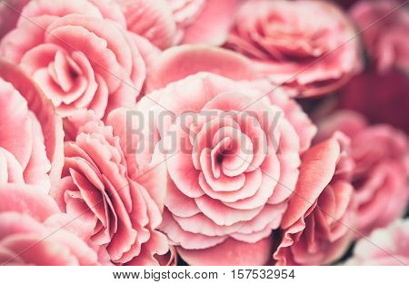 Background image of pink roses close up