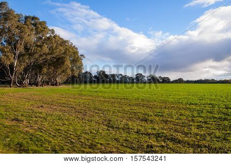 Rich evening light over broad green fields edged with gum trees in rural Victoria, Australia
