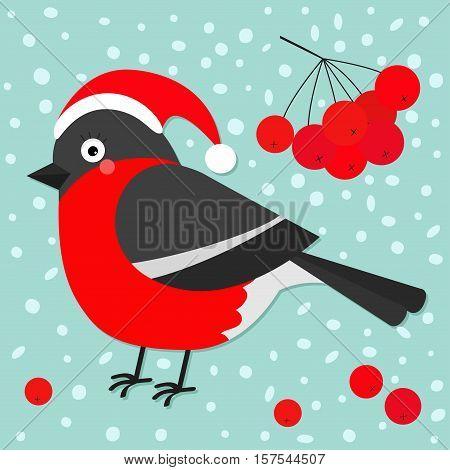 Bullfinch winter red feather bird rowan rowanberry sorb berry tree branch. Santa hat. Cute cartoon funny character. Baby collection. Flat design. Blue snow background Vector illustration