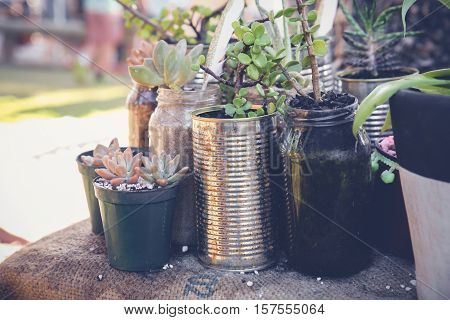 succulents in rustic used jars and tins Eco and reuse concept
