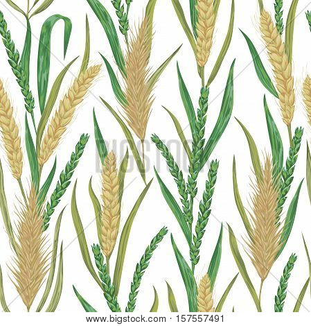 Seamless pattern with cereals. Barley, wheat, rye. Collection decorative floral design elements. Isolated elements. Vintage vector illustration in watercolor style.