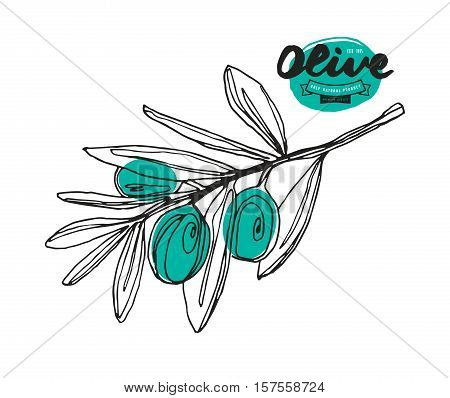 Stock vector illustration of olive branch. Hand drawing style. Print on white background