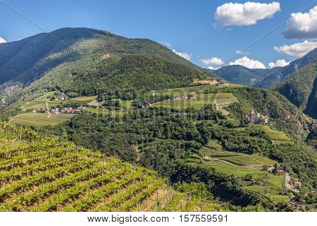 Vineyards Near Bozen, South Tyrol