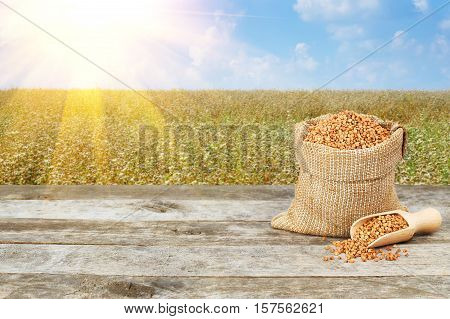 Buckwheat in burlap bag on wooden table with flowering buckwheat field with sunshine on background. Buckwheat. Agriculture and harvest concept. Uncooked buckwheat groats on nature background. Buckwheat with buckwheat field background