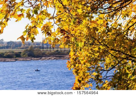 colorful maple leaves on branch close-up against the blue clear sky, vegetation illuminated the evening autumn sunshine, sunny evening, the distance a man on a boat on the river, beautiful background,