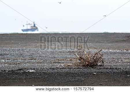 desert landscape of the Northern coast with black beaches and the tree in the background of the floating ship in the fog