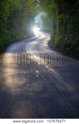 Curving Country Road Through Thick Forest
