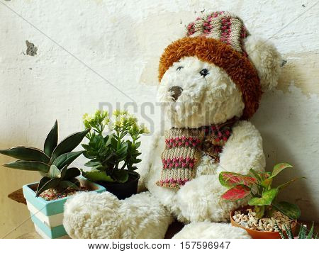 Teddy Bear Sitting On Wooden Table With Green Plant