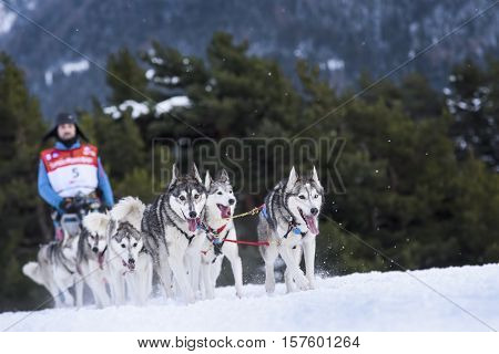 SARDIERES VANOISE FRANCE - JANUARY 19 2016 - the GRANDE ODYSSEE the hardest mushers race in savoie Mont-Blanc Donato EGLI sweeden musher Vanoise Alps