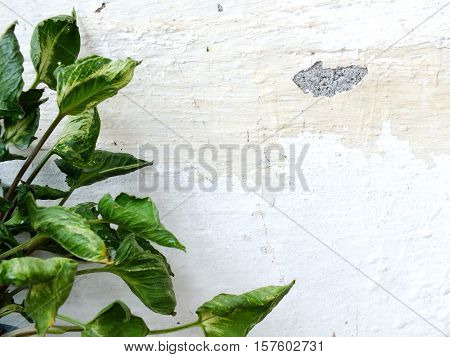 green leaves on grung wallpaper with space background