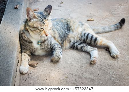 Cat asleep lying on the floor stock photo