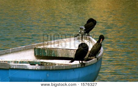 Birds On Boat