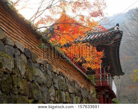 Beautiful Traditional Korean Style Old Building and Old Wall with the Autumn Foliage, South Korea