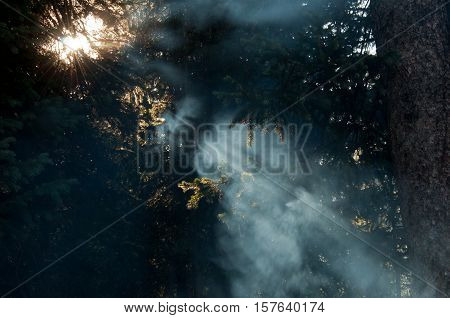 Sun Rays beaming through Forest floor as Camp fire sets up for morning breakfast camping in the Colorado Rocky Mountain Forest