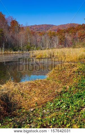 North Cumberland Wildlife Management Area Sundquist Unit beaver pond in autumn