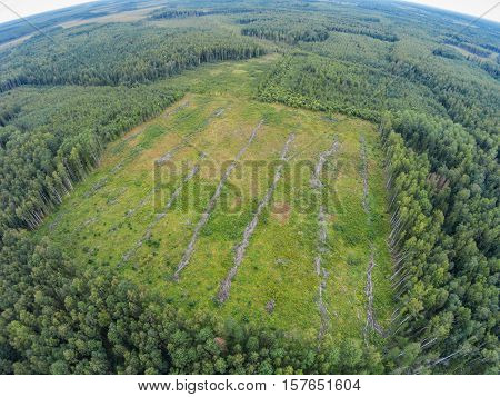 Old plots, where they cut down the forest. Where lost mushroom pickers. The picture was taken during a search for a lost mushroom picker.
