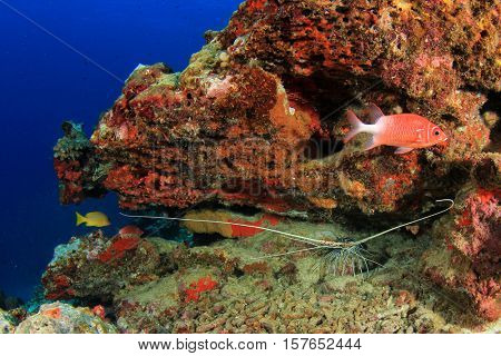 Underwater coral reef with fish in Indian Ocean