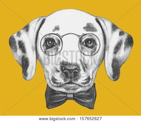 Portrait of Dalmatian Dog with glasses and bow tie. Hand drawn illustration.