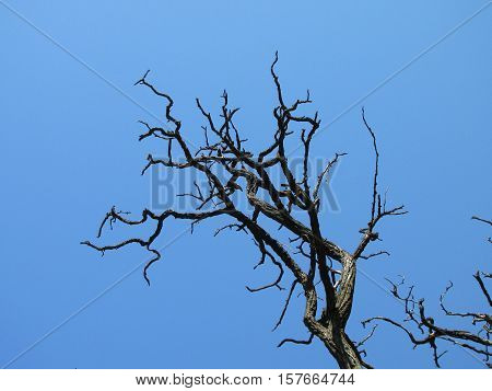dry tree aphyllous, arid, bare, beautiful, beauty