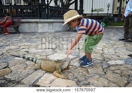 Guayaquil Ecuador - January 21 2014: Child playing with an iguana in the Parque Bolívar in Guayaquil Ecuador.