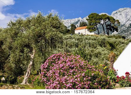 Bar.Montenegro.03 june 2015.Church on mountain in the old town of Bar in Montenegro on a sunny summer day.