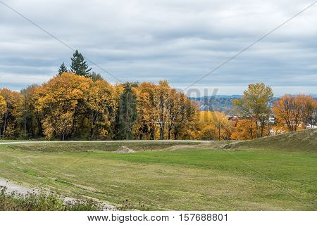 Many shades of Autumn yellow are revealed in Kent Washington.