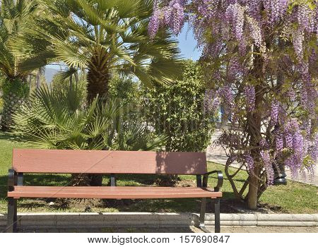 Wooden bench among plants in the promenade of Marbella Spain.